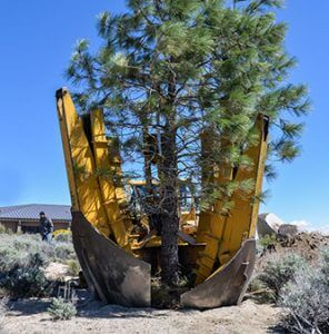 """A 30"""" Ponderosa Pine being planted by our company tree spade."""