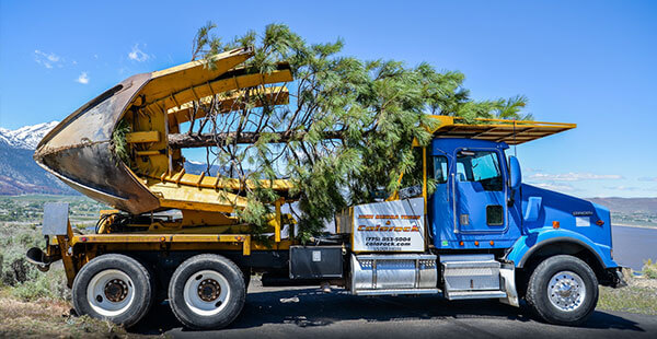 Cropped Picture of Tree Relocation Truck with Tree