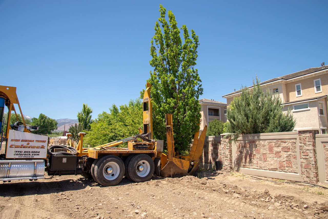 Large Trees | Gail Willey Landscaping