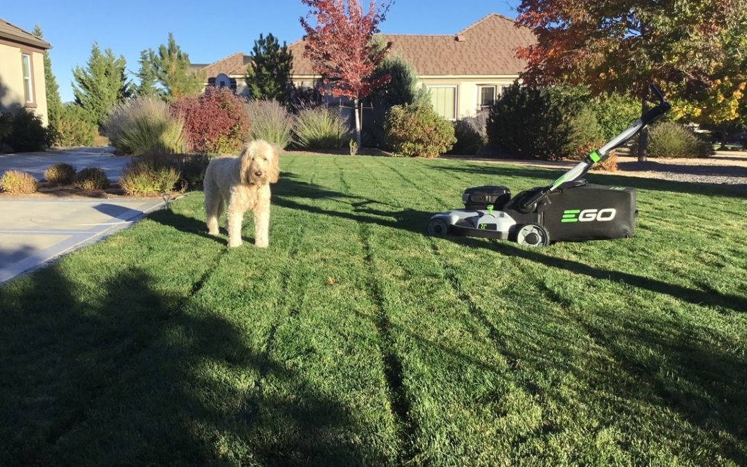 Dogs and your lawn can coexist!